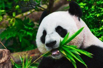Графики в Pandas